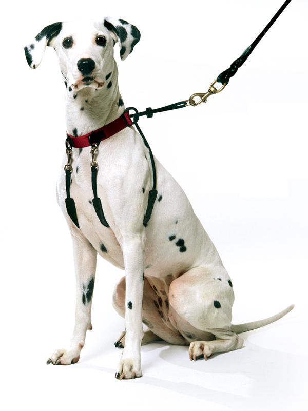 You may be using these dog walking tools wrong! 18