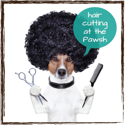 hair cutting at the pawsh