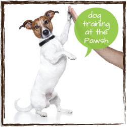 dog training at the pawsh